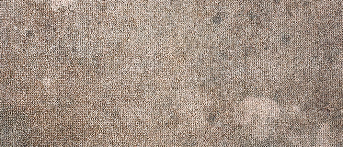 Are dirty carpets harmful to your health